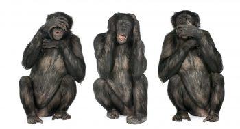 Three Wise Monkeys : Chimpanzee